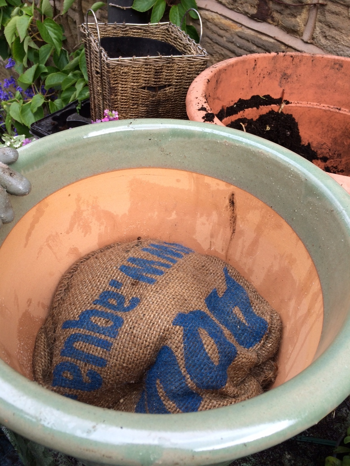 a photo of aqua-sac in a plant pot showing how greening works